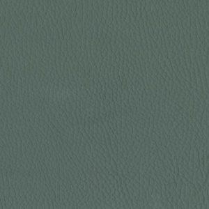Lichen – 0690