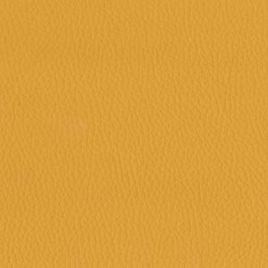 Mustard – 0806